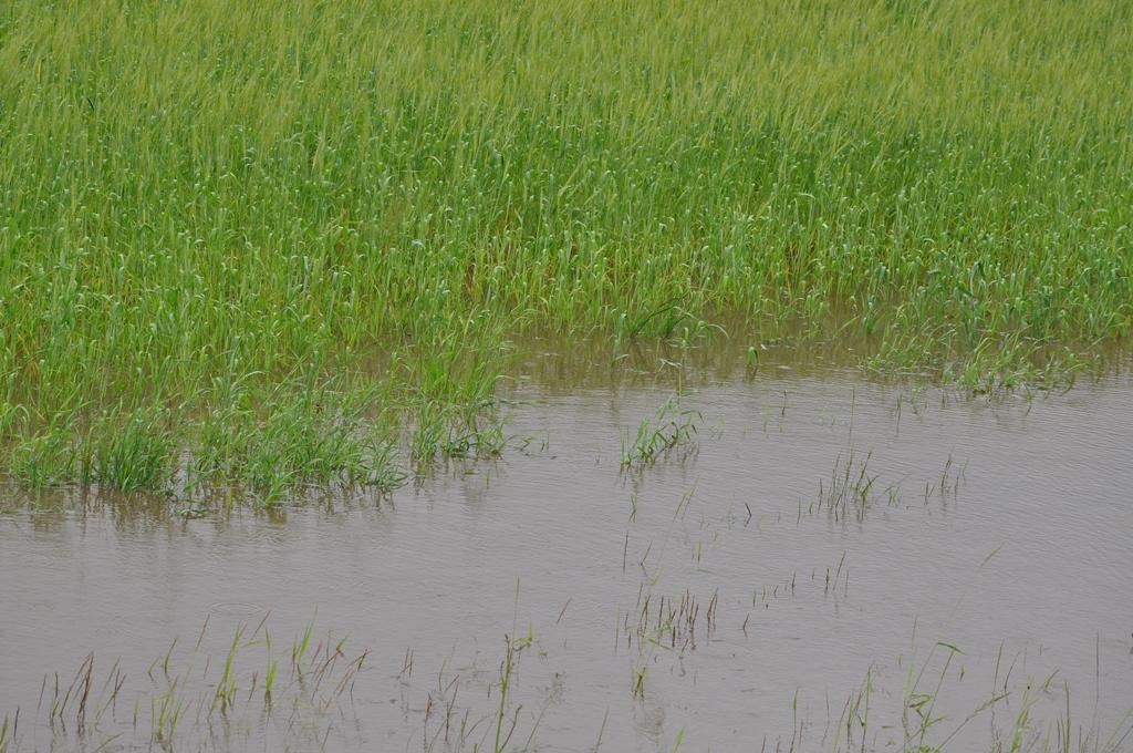 ВЧувашии введут режимЧС из-за неблагоприятных погодных условий